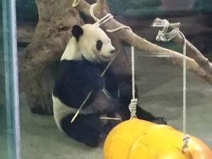 With Pandas!